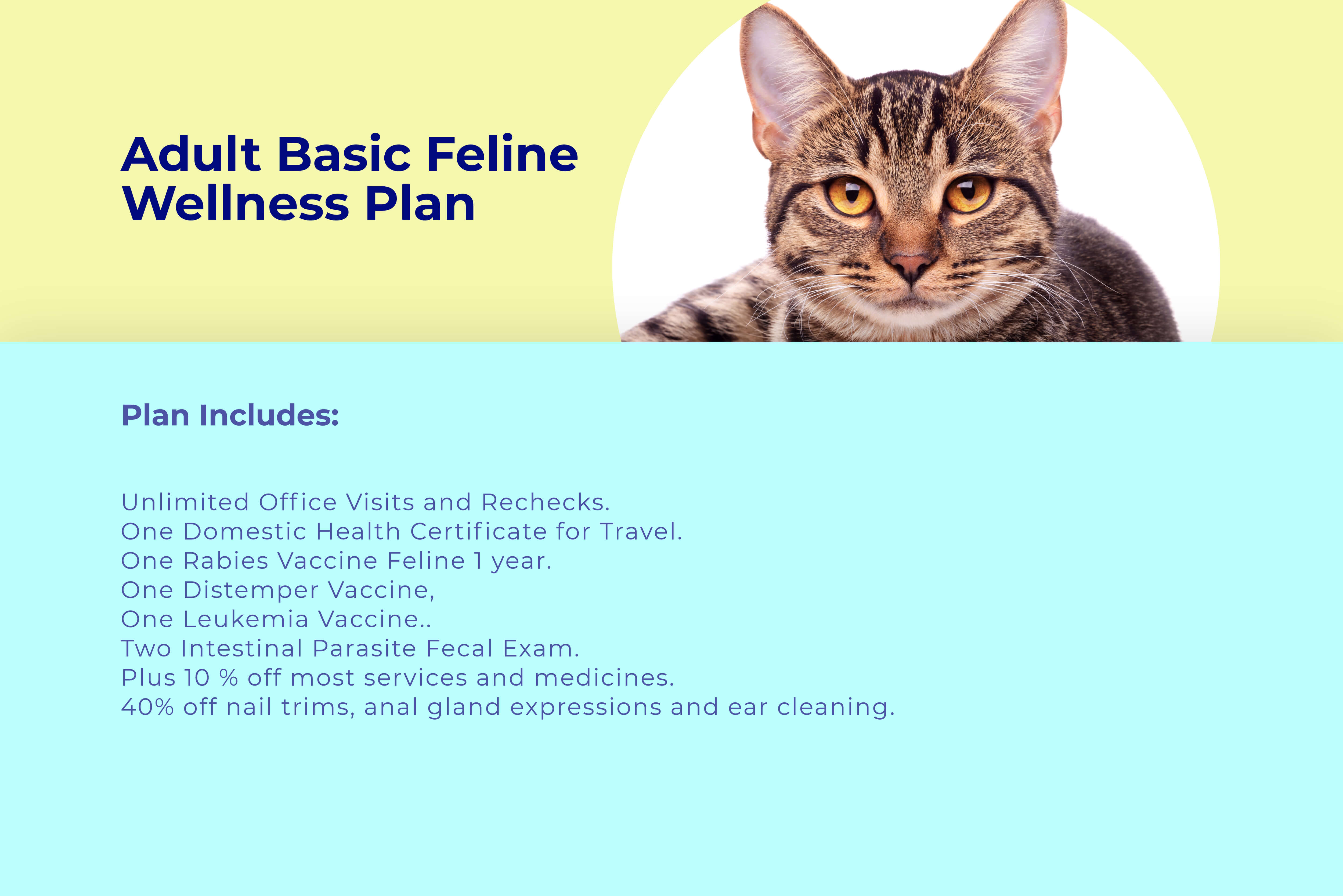 Adult cat basic wellness plan at animal wellness clinic