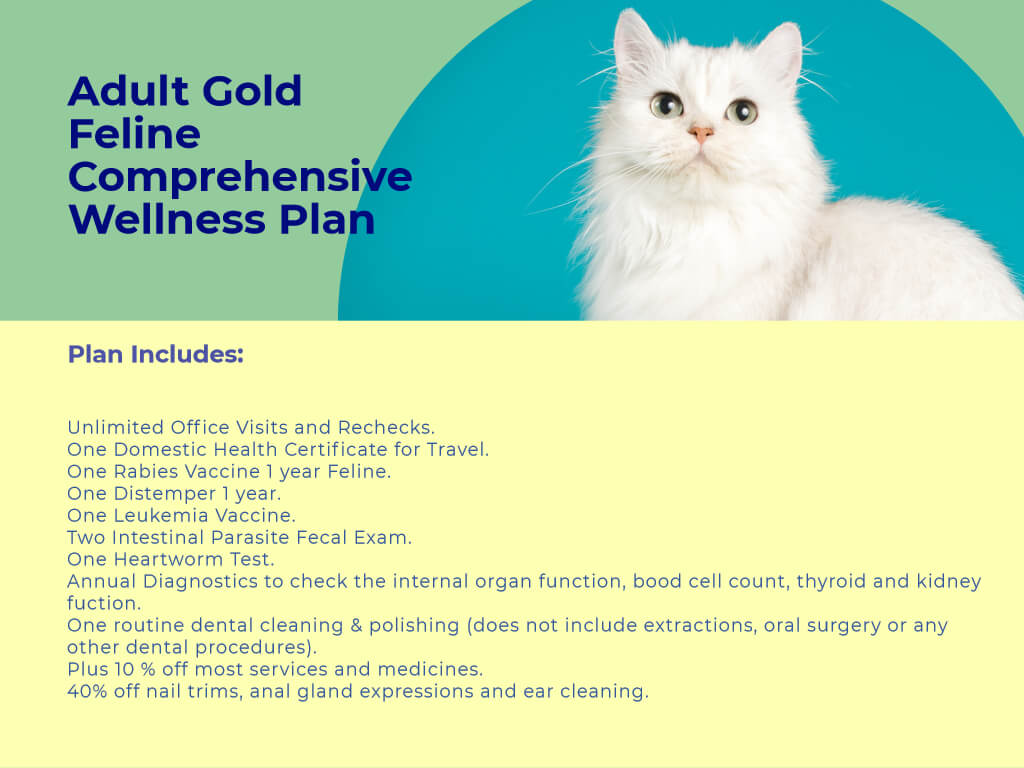 Adult Cat gold Comprehensive Wellness Plan Plus at animal wellness clinic