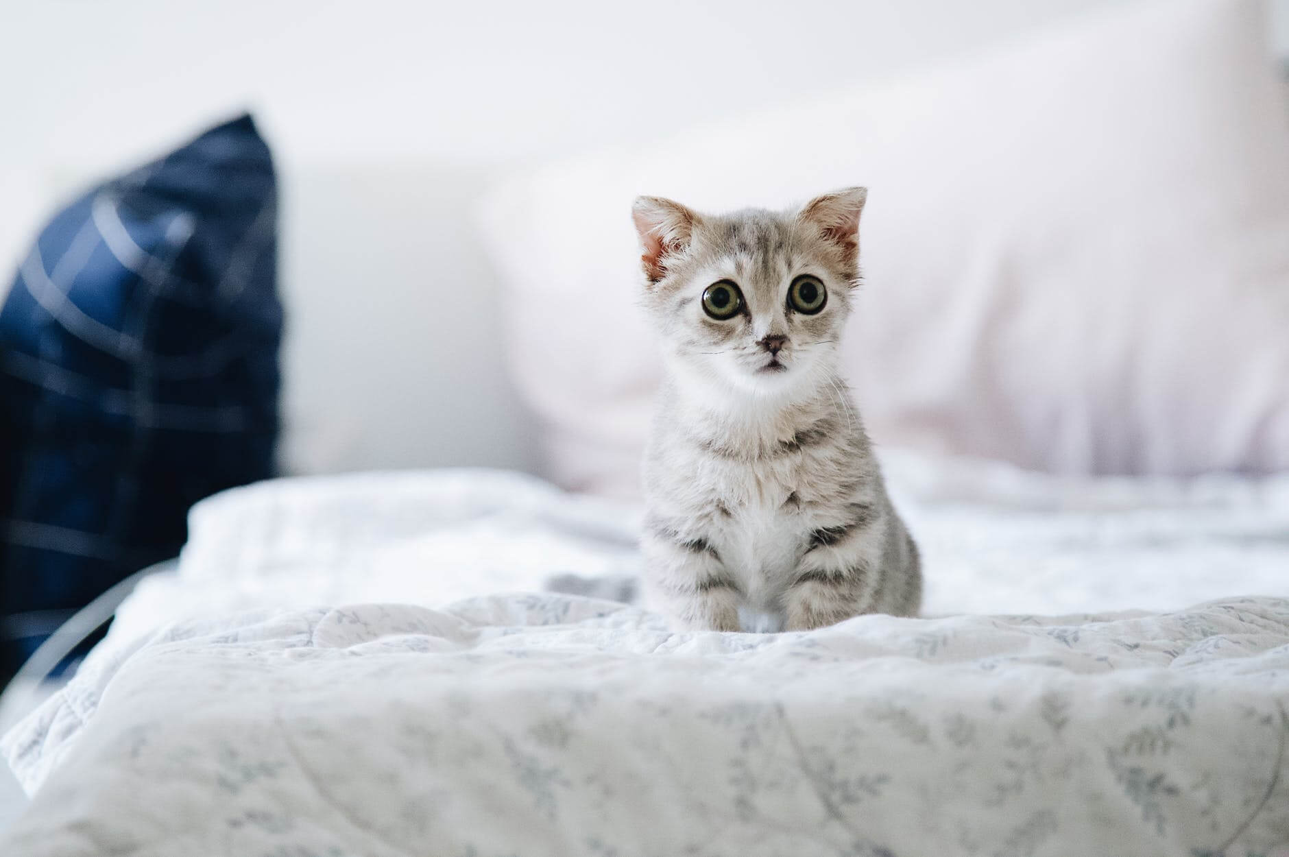 Cute kitten with lovely eyes