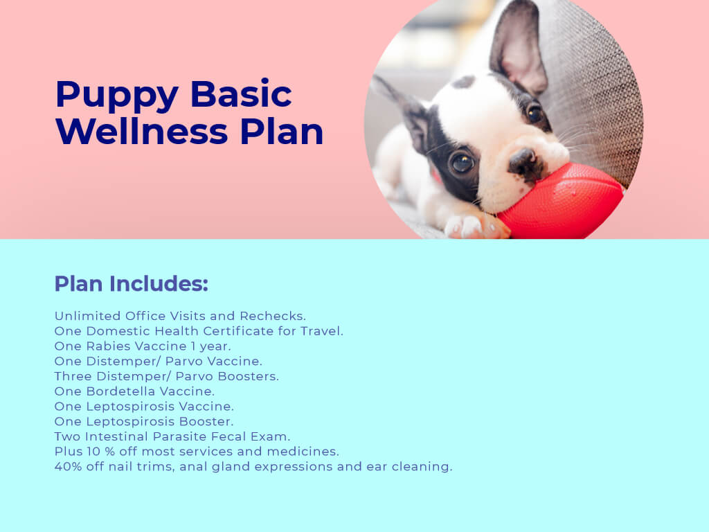 Puppy Basic Wellness plan