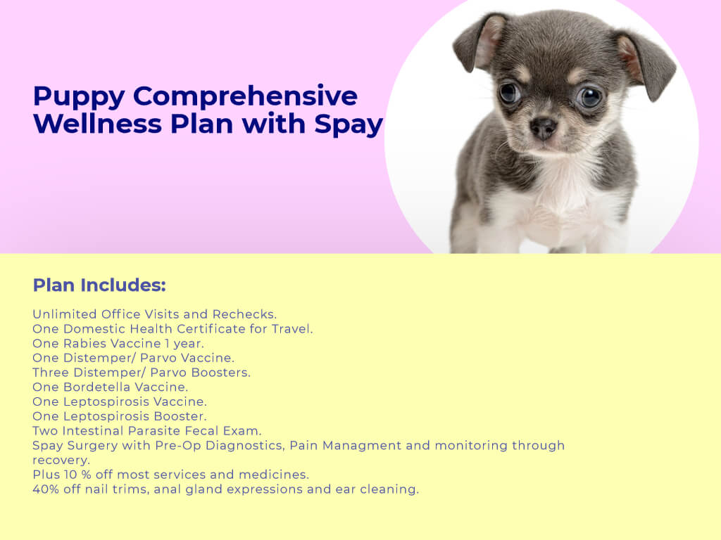 Puppy Comprehensive Wellness plan Spay at Animal wellness clinic