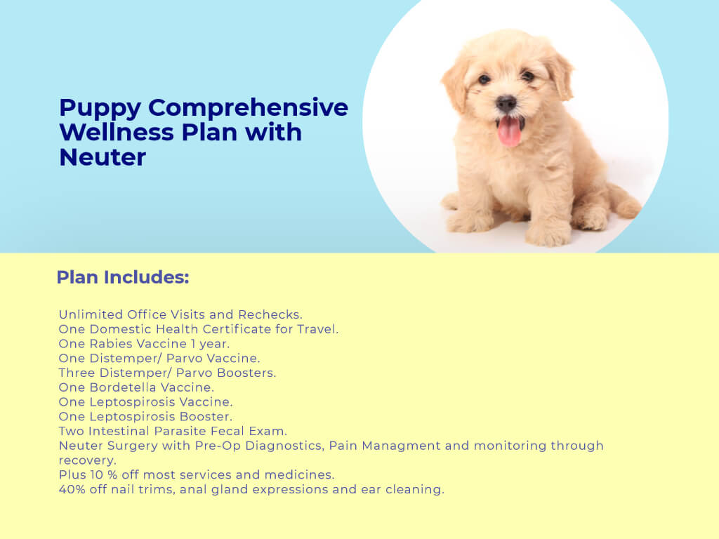 Puppy Comprehensive Wellness plan with neuter at animal wellness clinic.jpg