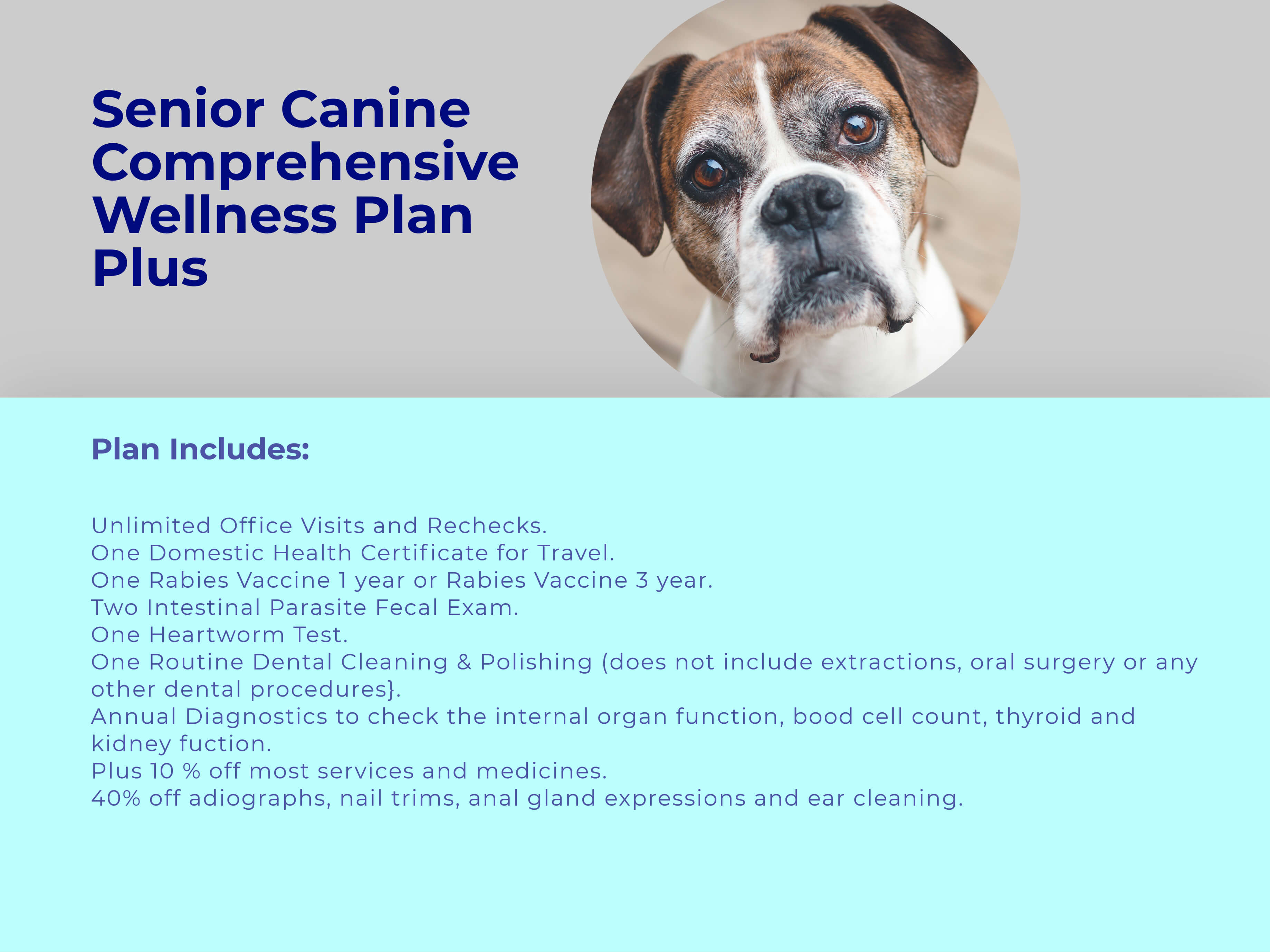 Senior Dog PLUS Comprehensive Wellness Plan at animal wellness clinic