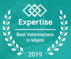 Best Vet in Miami