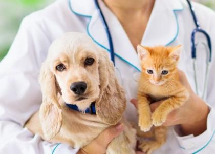 why dogs and cats need bloodwork