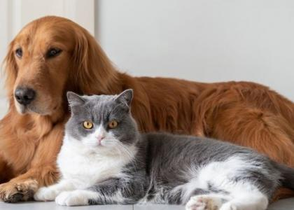 use of CBD on dogs and cats