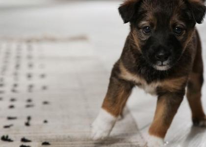 house training puppies