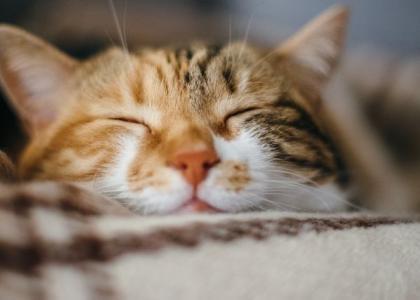 cat wellness for pet wellness month