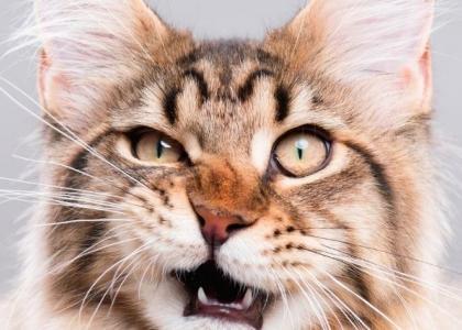 wonky cat behavior